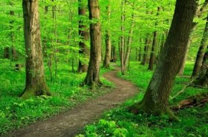 path-woods