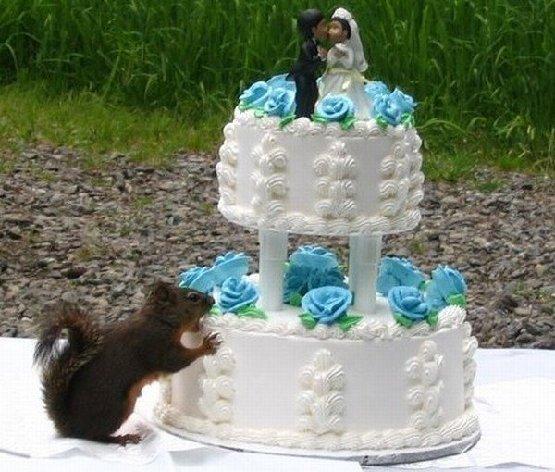 squirrel cake